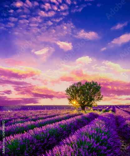 Tree in lavender field at sunset in Provence, France Canvas-taulu