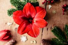 Blühende Rote Amaryllis Umgeben Von Weihnachtlicher Dekoration Auf Holz