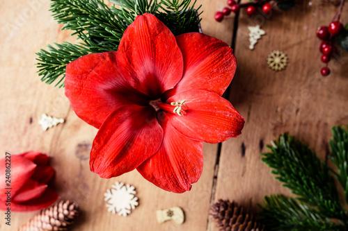 Photo Blühende rote Amaryllis umgeben von weihnachtlicher Dekoration auf Holz