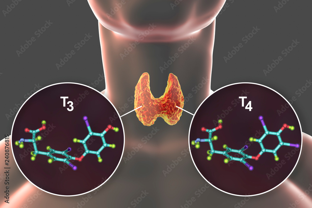 Fototapety, obrazy: Molecules of thyroid hormones T3 and T4. Triiodothyronine and thyroxine, 3D illustration