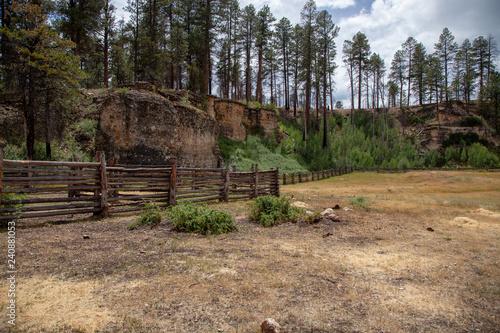 Photo  Billy Sink, Kiabab National Forest, Arizona