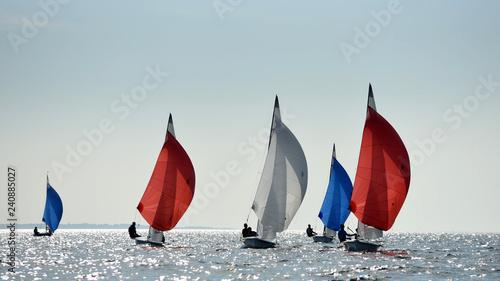 Canvas Prints Sailing Regate voile 505