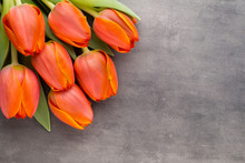 Tulips, Orange On The Grey  Background.
