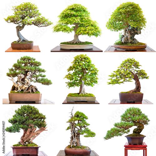 Fotobehang Bonsai Bonai Bäume verschiedne Nadelbäume Laubbäume