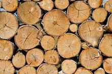Decorative Birch Log Wall.