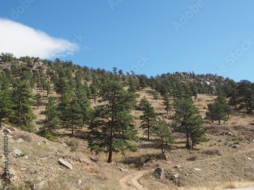 Fényképezés  Evergreen trees on a mountain