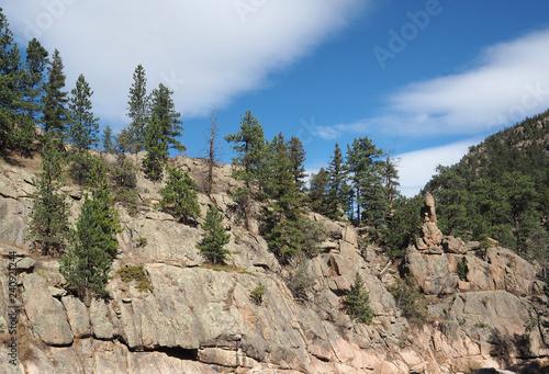 Fotografie, Obraz  Evergreen trees on a mountain