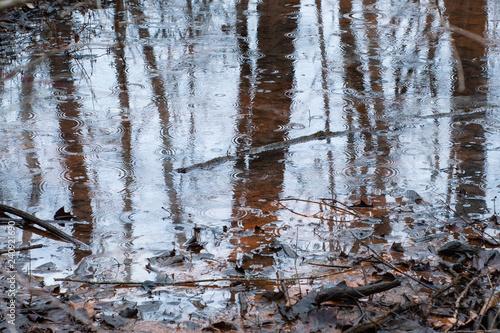 Fotografia, Obraz  Raindrops on a stagnant pond