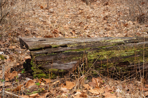 Fotografie, Obraz  Moss on a Fallen Log