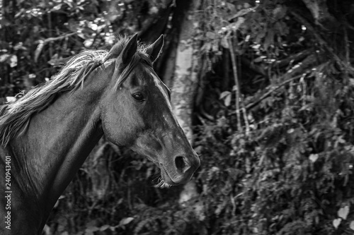 Close up on a horse with white streak down the middle of its face. Trees in background.