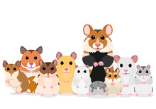 Group Of Hamsters