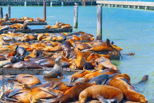 In de dag Verenigde Staten Seals Rookery. Ocean Quay in the north of San Francisco.
