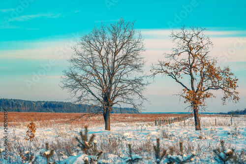 Rural landscape in winter. The field covered with snow and trees on the field