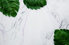 Monstera Leaves On A Marble Ba...
