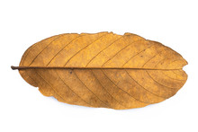 Dry Leaf Closeup Isolated On T...