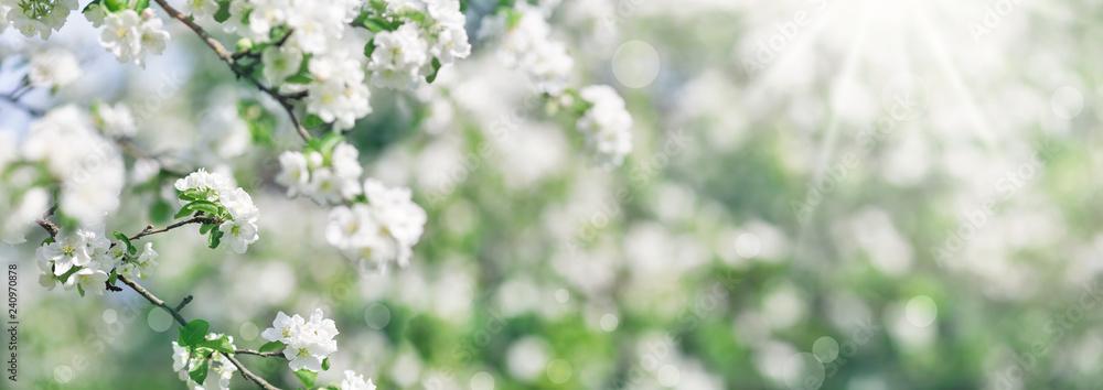 blurred apple tree background
