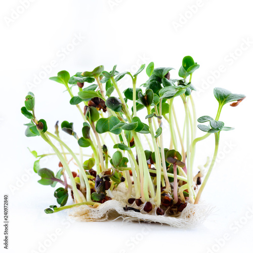 Fototapeta microgreen radish sprouts on a light background obraz na płótnie