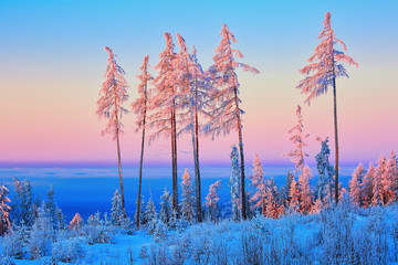 Panel Szklany Drzewa Larch and fir trees covered with frost at sunrise on the slope in Tatranska Lomnica, popular travel destination and ski resort in Slovakia