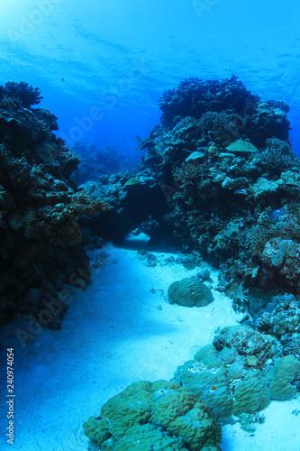 Spoed Foto op Canvas Oceanië Great Barrier Reef