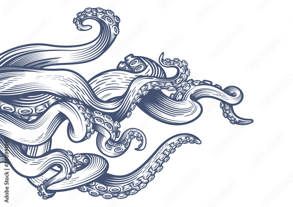 Fototapety, obrazy: Tentacles of an octopus. Hand drawn vector illustration in engraving technique isolated on white background.