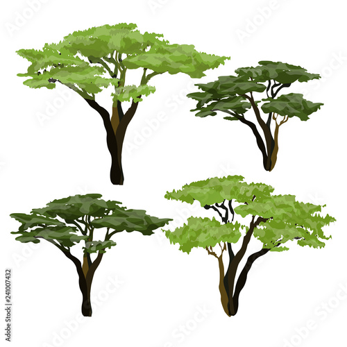African acacia tree. Plants of Africa. Wallpaper Mural