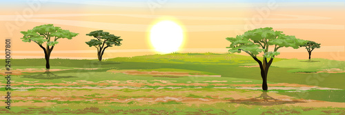 Fotobehang Lichtblauw African savannah. Grass, acacia trees. Realistic vector landscape. The nature of Africa. Reserves and national parks.