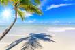 canvas print picture Cayo Levantado: Antillen, Karibik, Ferien, Tourismus, Sommer, Sonne, Strand, Auszeit, Meer, Glück, Entspannung, Meditation, Palmen, Himmel, Wolken: Traumurlaub an einem einsamen, karibischen Strand :)