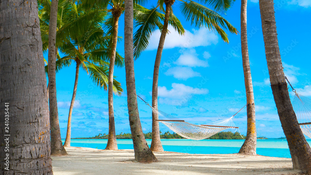 Fototapeta COPY SPACE: Gentle summer breeze swinging the rope hammock under the palm trees.