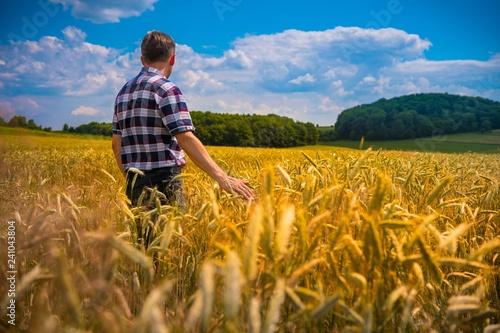 Fototapeta Rolnik w łanie zboża obraz