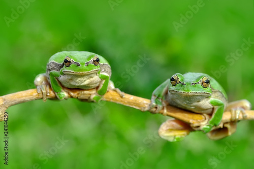 Tuinposter Kikker Tree frog - Stock Image