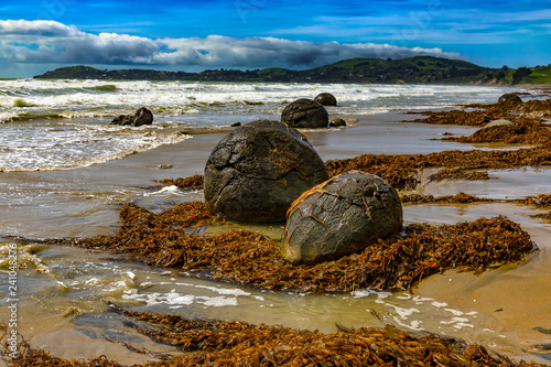 Spoed Foto op Canvas Oceanië New Zealand. South Island, Otago coast. The Moeraki boulders - spherical rocks, over 1 m across