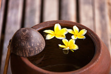Clay Jug With Flower Plumeria Or Frangipani Decorated On Water. Bowl In Zen Style For Spa Meditation Mood