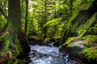 Wald im Vallée de la Wormsa in den Vogesen