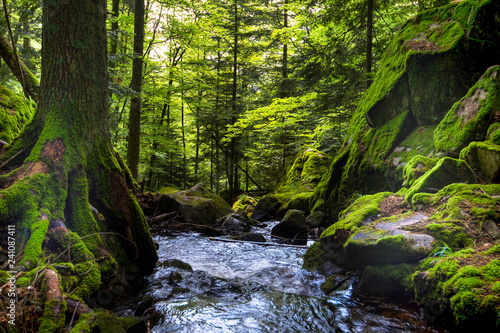 Printed kitchen splashbacks Forest river Wald im Vallée de la Wormsa in den Vogesen