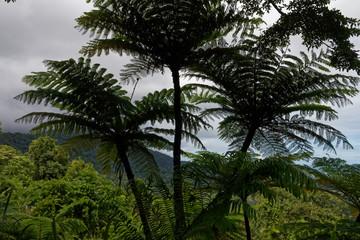 Panel Szklany Eko Las deszczowy, Australia