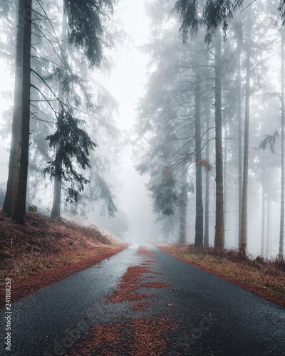 tajemnicza-ulica-w-mglistym-ciemnym-mokrym-lesie