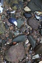 Pebble Beach Stones And Shells
