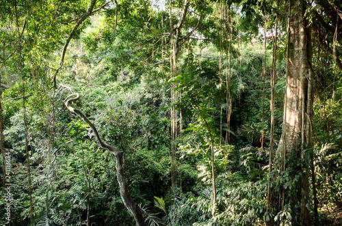 Photo Bali tropical jungle