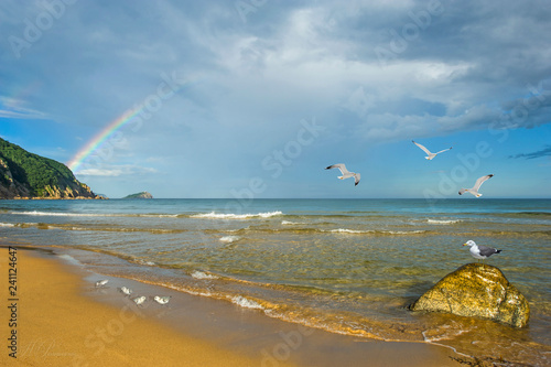 Rainbow over the coast against the sea and birds, such as gulls and sandpipers