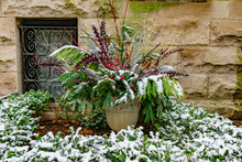 Holiday Planter With Pine Bran...