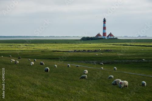 Spoed Foto op Canvas Noordzee lighthouse westerhever sheep field