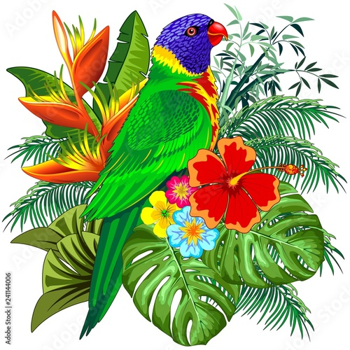 Garden Poster Draw Rainbow Lorikeet Exotic Colorful Parrot Bird Vector Illustration