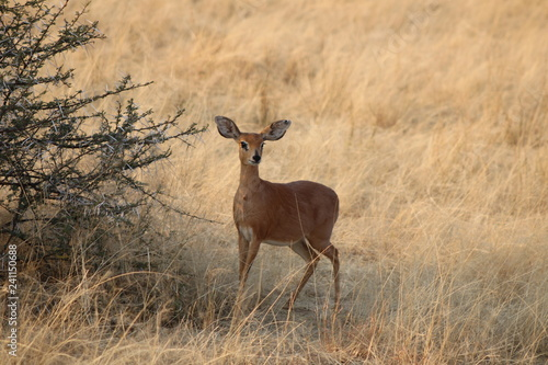 Door stickers Antelope kleine Antilope