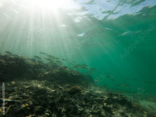 Fototapety, obrazy: red sea, underwater world