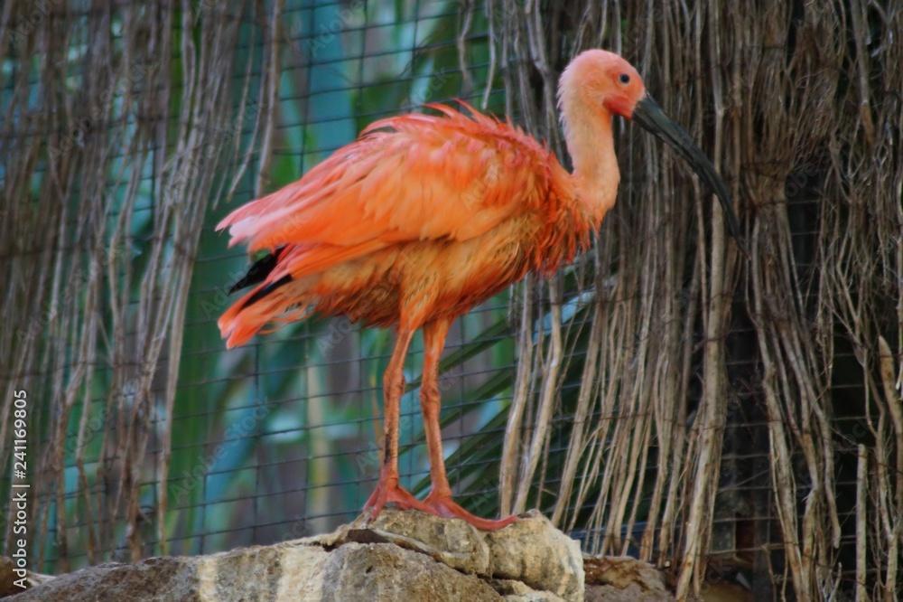 Ein Flamingo im Palmitos Parque - Gran Canaria II