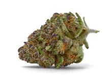 Close Up Of Kush OG  Prescription Medical Marijuana And Recreational Weed Hybrid Strain Sticky Flower Bud Isolated On A White Background