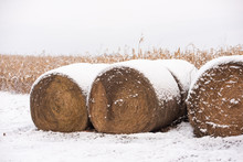 Three Bales Of Hay In The Snow