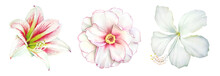 Realistic Watercolor Botanical...