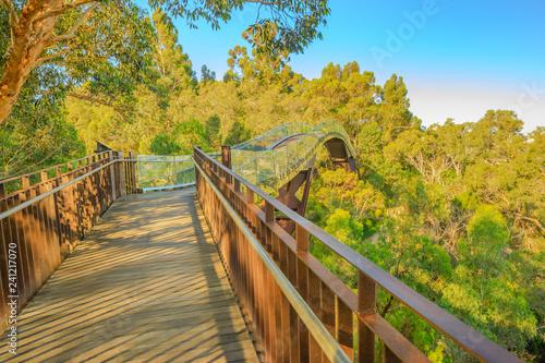 Staande foto Oceanië Glass bridge in Kings Park, Perth city, Western Australia. Sunny day, blue sky. Tree top walkway at Botanical garden, the most popular visitor destination in WA.