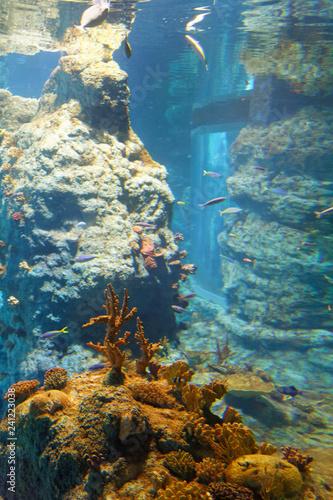Fototapeta Akwarium 4 obraz